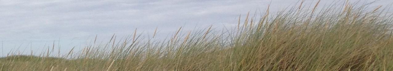 cropped-grass-sky3.jpg